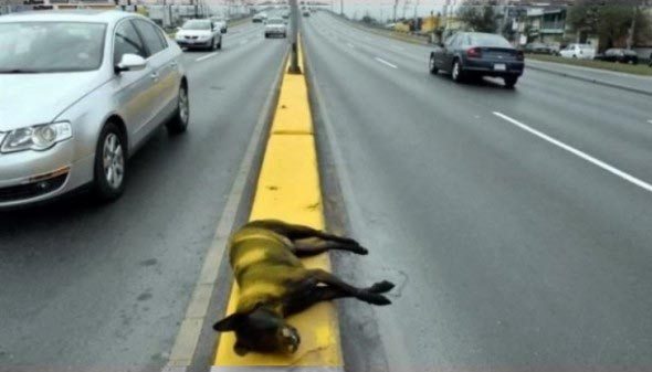 Too Bad: See What City Workers Did To A Dead Dog On A Street (Photo)