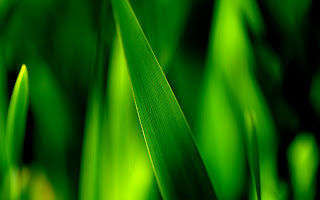 Grass Green Macro HD Wallpaper