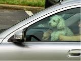 dogs in cars getting coffee 2