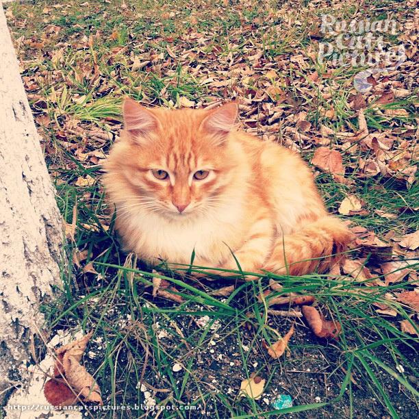 Sad Instacats Cat 02