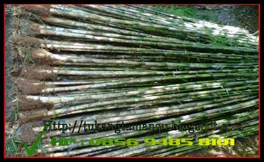 http://tukangtamanqu.blogspot.com/2014/12/jual-bambu-pagar-bambu-hias-bambu.html