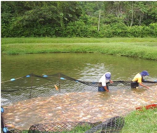 Inversiones misiones emprendimiento de pisicultura en for Elaboracion de estanques para piscicultura