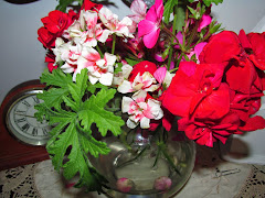 Geraniums provided some lovely