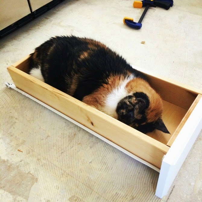 The Holland House: Cat in a drawer