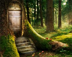 Solucion Enchanted Forest Escape Guia