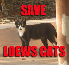 Save Loews Cats