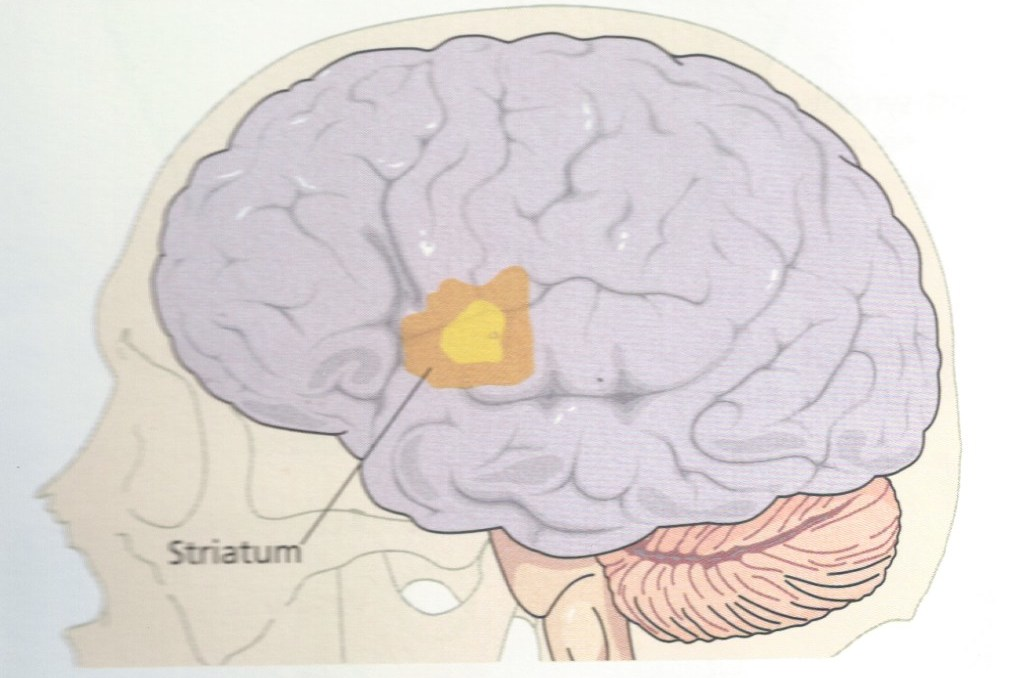 valium effects on the nervous system