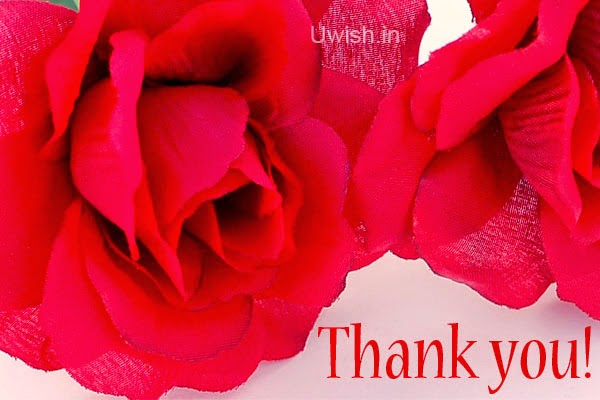 Thankyou e greeting cards and wishes with red rose.