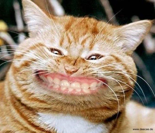 lustige tierbilder bilder - Lustige Bilder Lachmeister