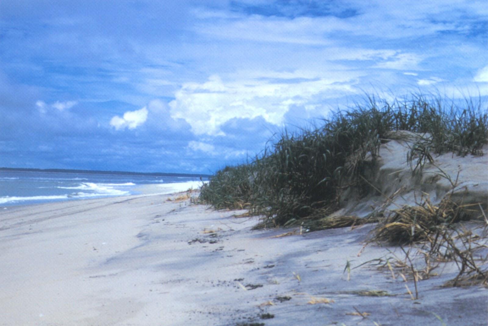 Assateague Island Beach Pictures
