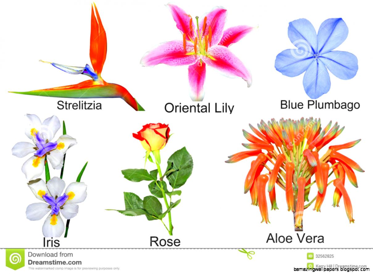 Images Of Flowers With Their Names Amazing Wallpapers