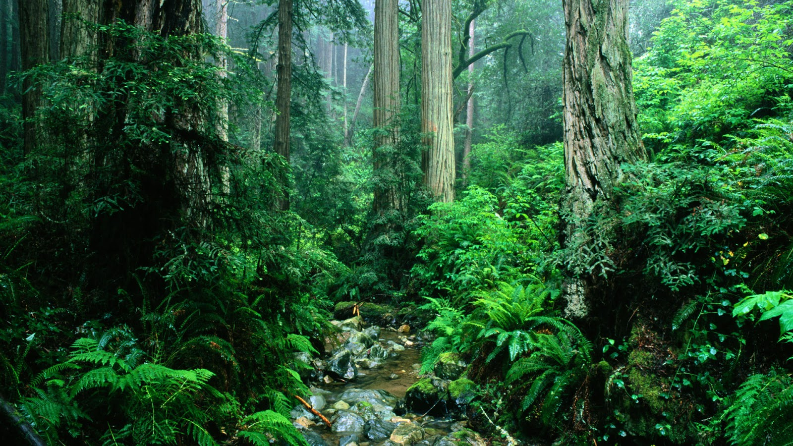Nature in california usa hd - Amazon wallpaper hd ...