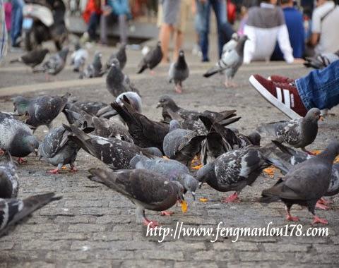 水坝广场鸽子