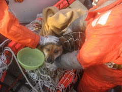 no Japão: cão (que afinal é uma cadela) encontrado vivo em alto mar três semanas após o tsunami!