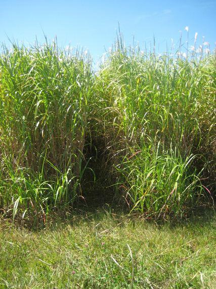 Missouri beginning farming growing biomass crops in iowa - Profitable crops small plots ...