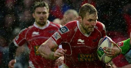 John Barclay, Scarlets, Llanelli, Flanker, Scotland, rugby