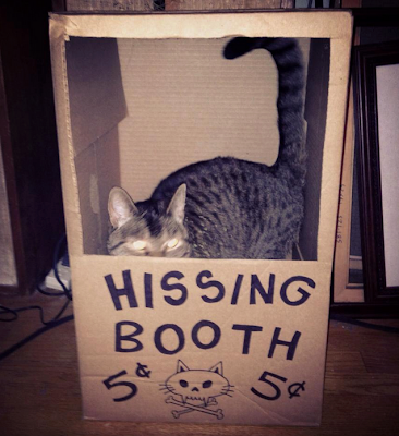 Bright eyed cat tending the hissing booth.