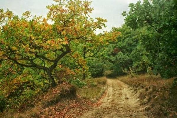Hutan Hoia-Baciu, Rumania