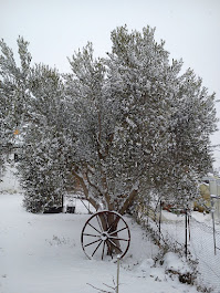 χιονισμενη ελια