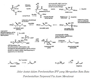 struktur triterpenoid dan steroid