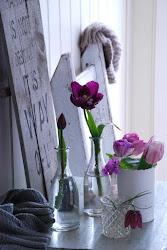Tid for å legge tulipaner!