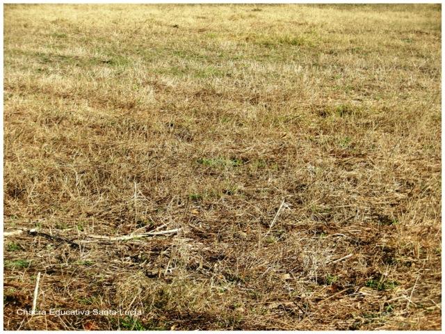 Los pastos están secos y amarillentos - Chacra Educativa Santa Lucía