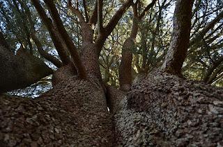 arboels en El Bosque