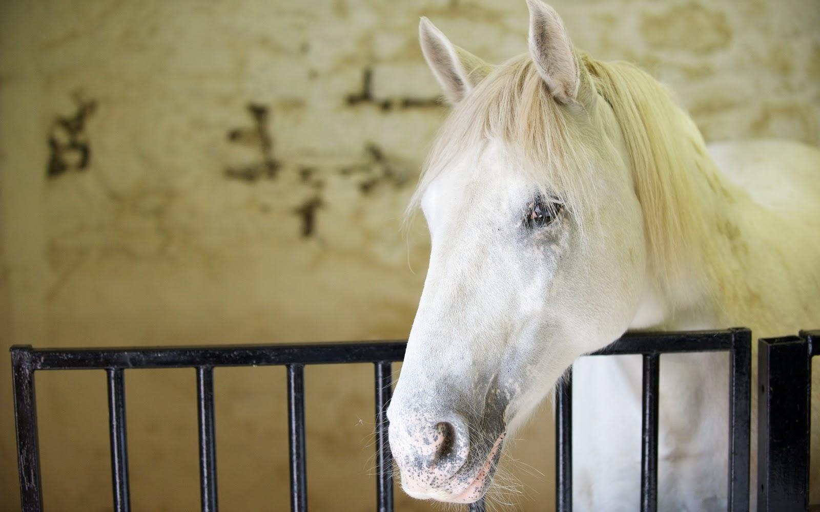 horse wallpapers wild horses photos | animal photo