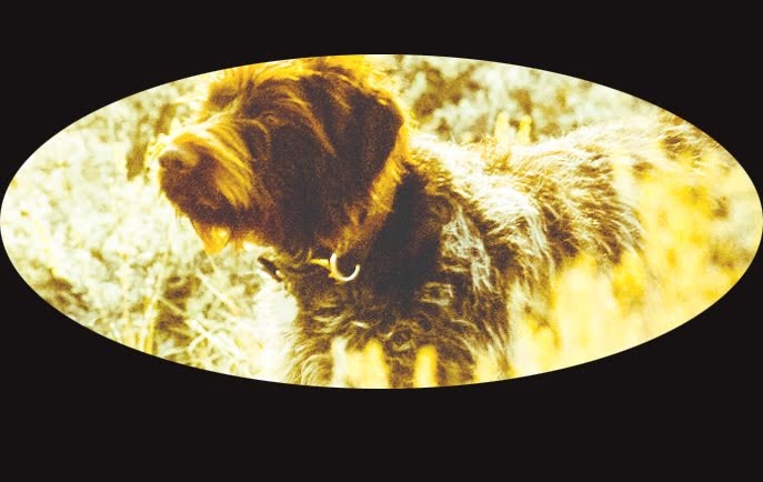 Late Great Kate the Wirehair