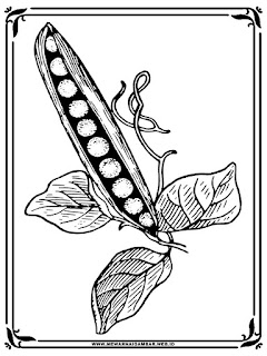 mewarnai gambar buah dan pohon kacang polong