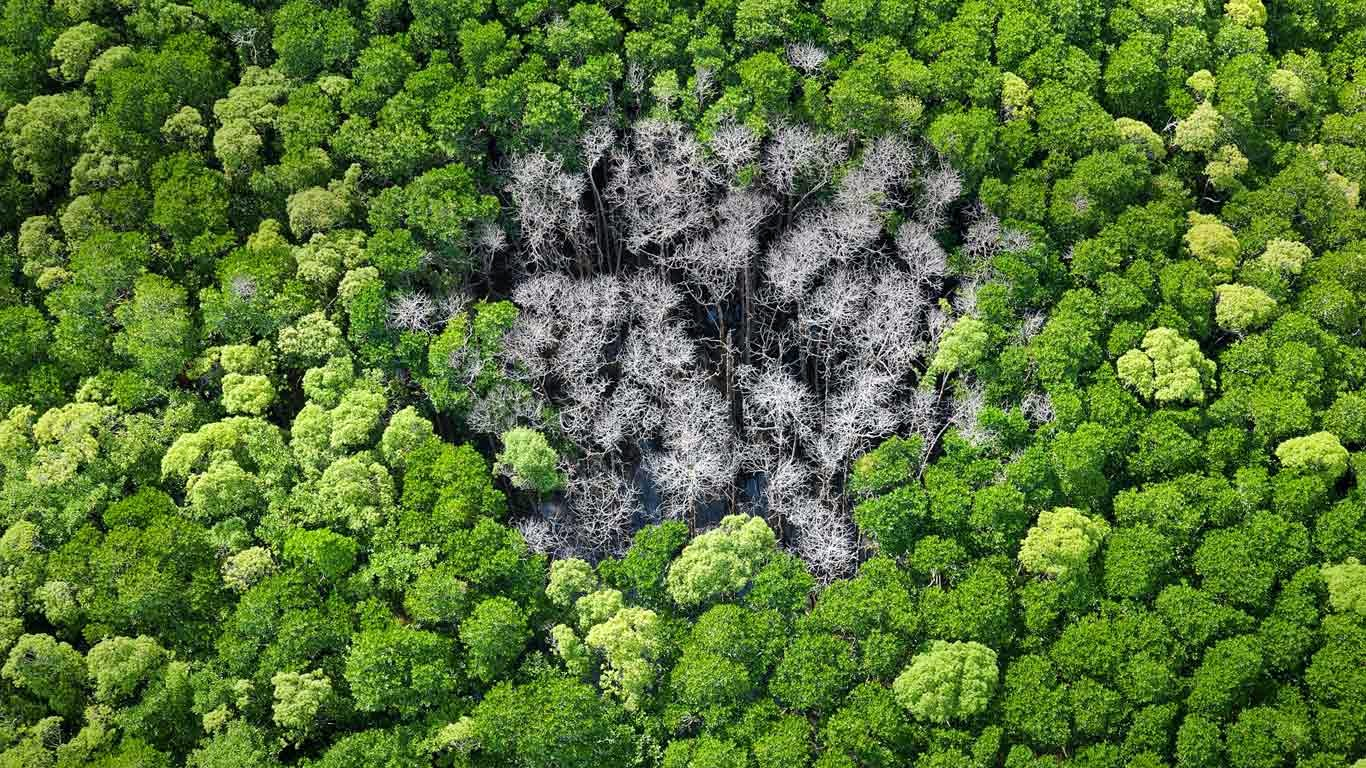 Rainforest trees burnt by lightning in Daintree National Park, Far North Queensland, Australia (© Peter Adams/plainpicture) 112