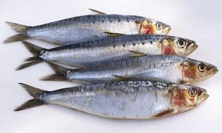 Luar Biasa! Ternyata Ikan Sarden Mempunyai 7 Manfaat Bagi Kesehatan