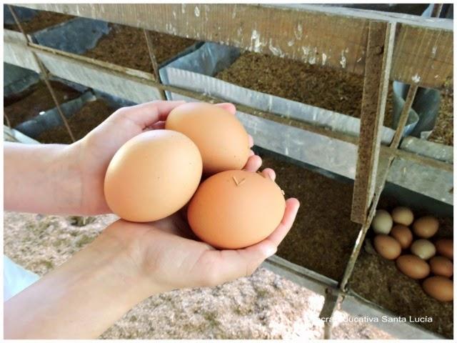 Huevos frescos - Chacra Educativa Santa Lucía