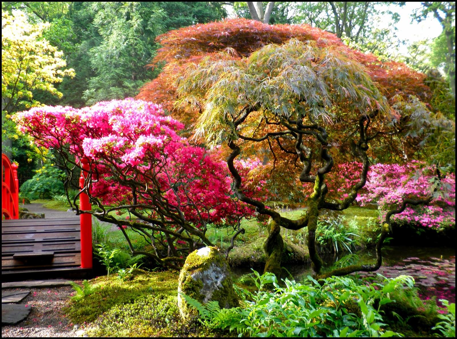 Japanese Zen Garden: Japanese Garden - The Hague