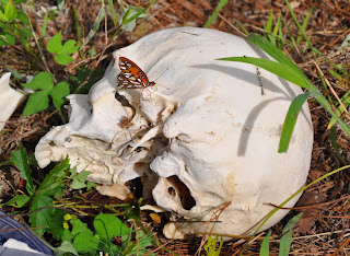 A skull with a butterfly on top.