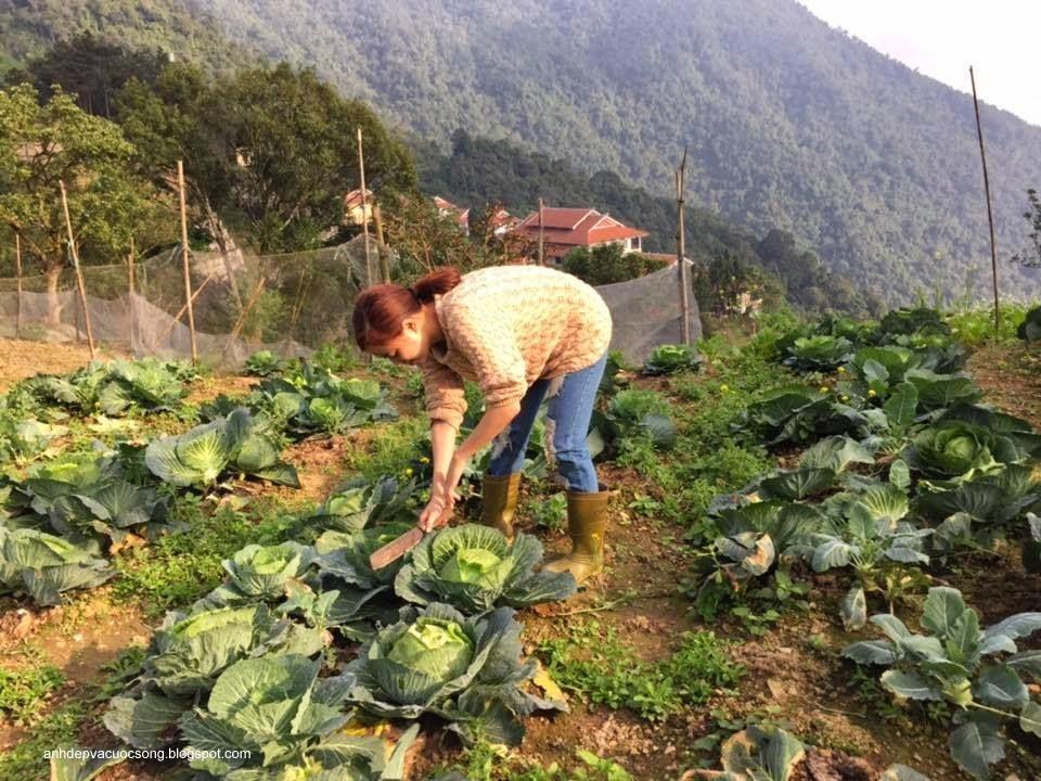 Ca sĩ Hoàng Thùy Linh nô đùa bên vườn rau 12