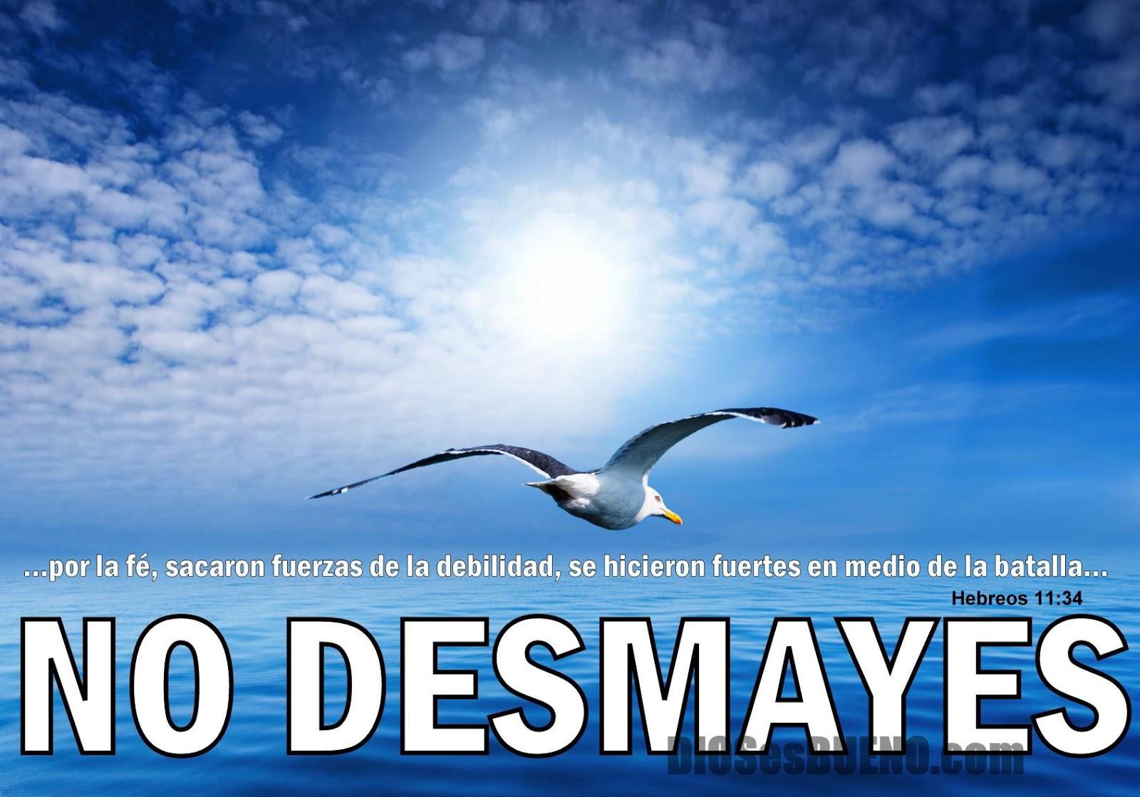 no desmayes