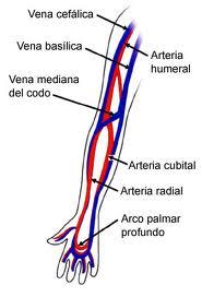 Angiology e il sito web di chirurgia vascolare