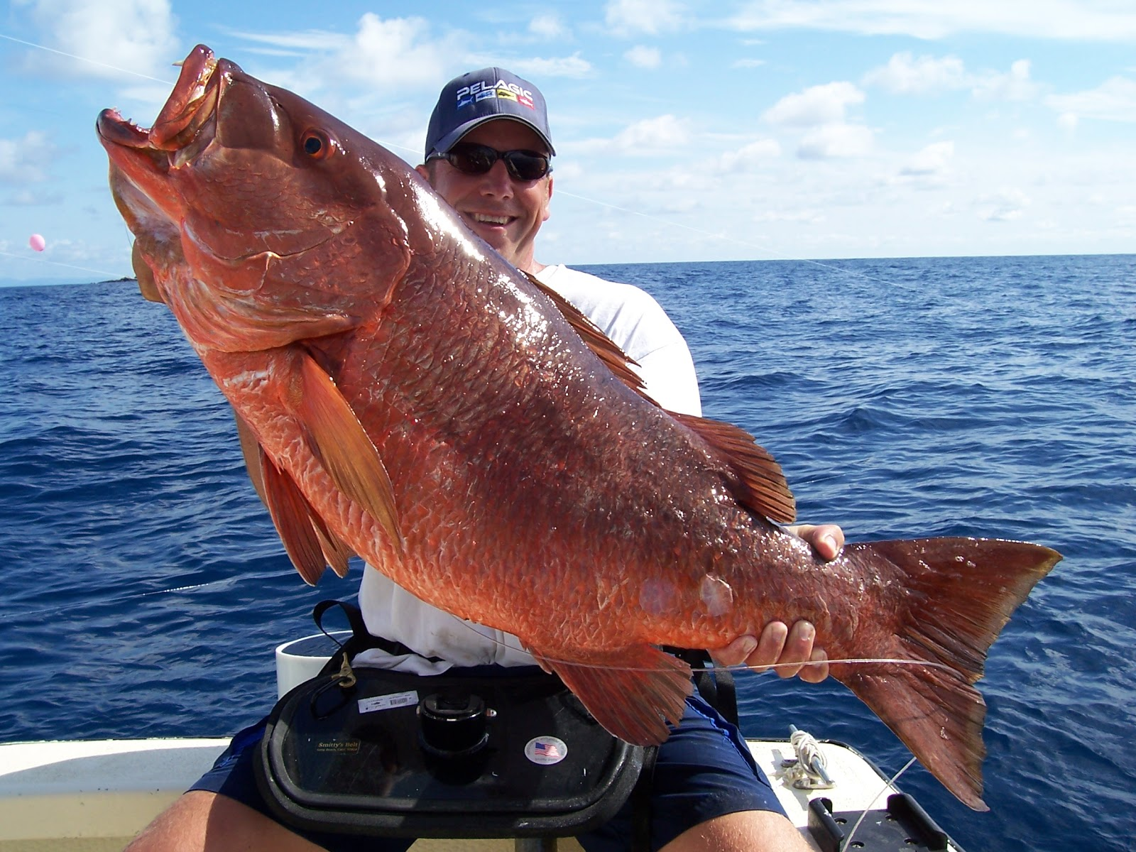 Big fishes of the world snapper cubera atlantic lutjanus for The biggest fish