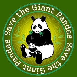 Whats Wrong with Giant Pandas  Today I Found Out