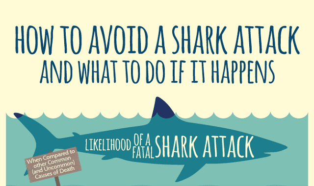 How to Avoid a Shark Attack And What to Do if it Happens
