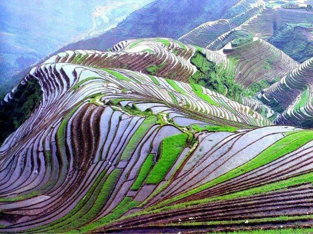 Tourism rice field terraces in yunnan china for What are terraces