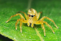 Spiders HD 23