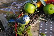 Kalendarz ogrodnika - LUTY