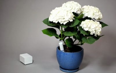 Innovative Gadgets That Lets You Know Your Plants Are Thirsty (13) 2