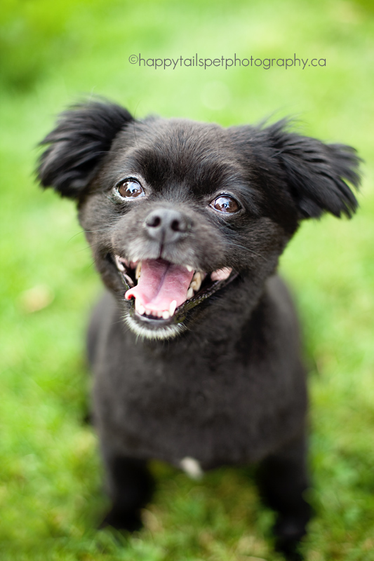 A small black dog smiling