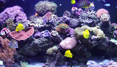 reef aquarium live rock