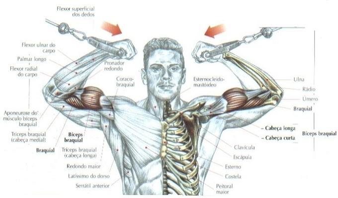 Braços fortes: aprenda 9 exercícios para defini-los em poucas semanas