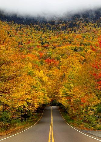 Autumn Tree Tunnel, USA