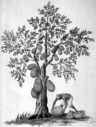 gambar pohon saat melamar pekerjaan